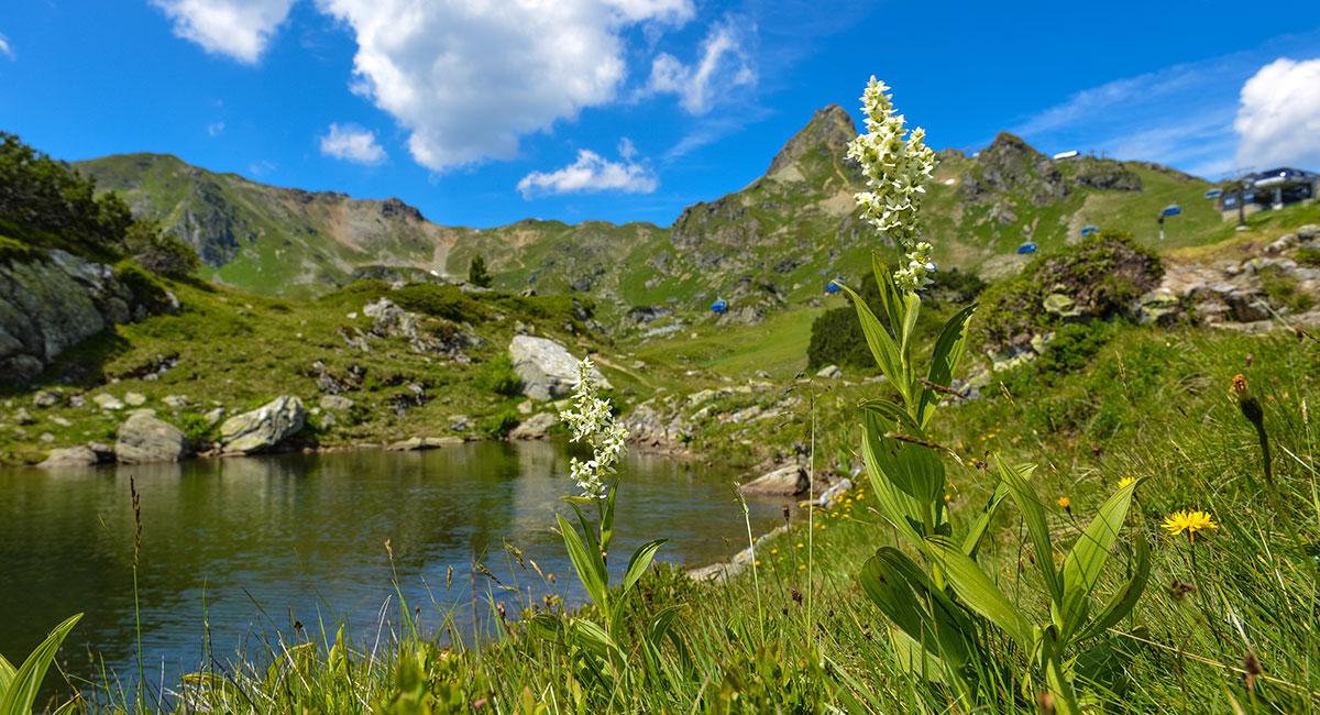 Toplage im Sommerurlaub in Obertauern